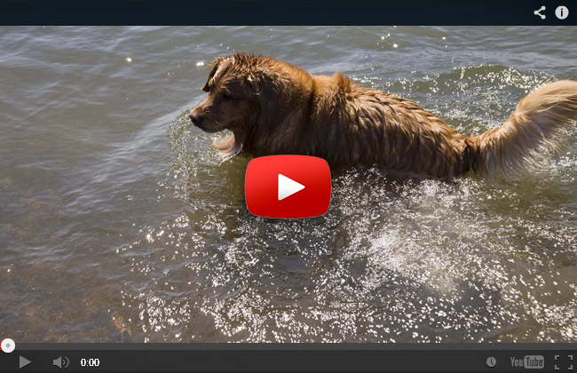 Hund rettet Rehkitz aus dem Meer