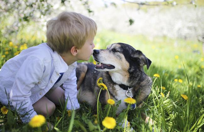 Familienfreundliche Hunderassen 1