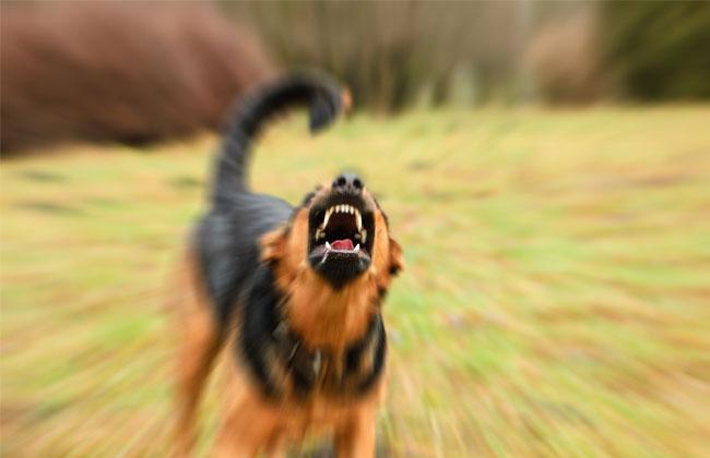 Rottweiler Attacke Waris