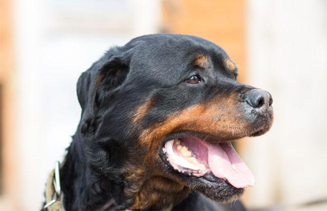 Hundehaltung Wien