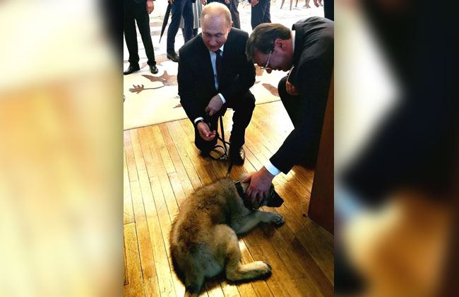 Putin-Sarplaninac2
