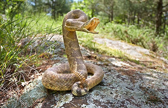 Dreäugige Schlange wurde gefunden!