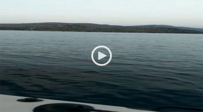 Delphin-in-Sibenik