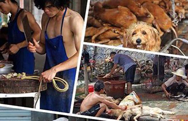 Hundefleischfestival