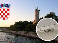 Spinne in Kroatien