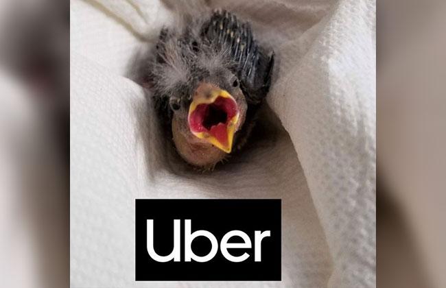 Vogelbaby gerettet!