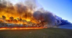 Brand im Regenwald Amazonas