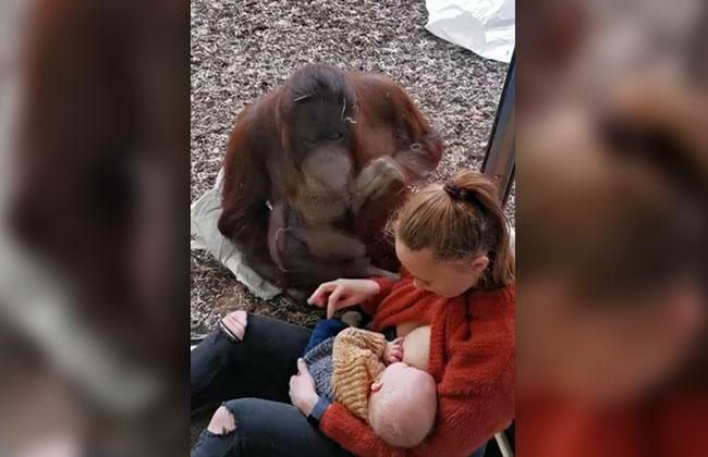 Affe-Mutter