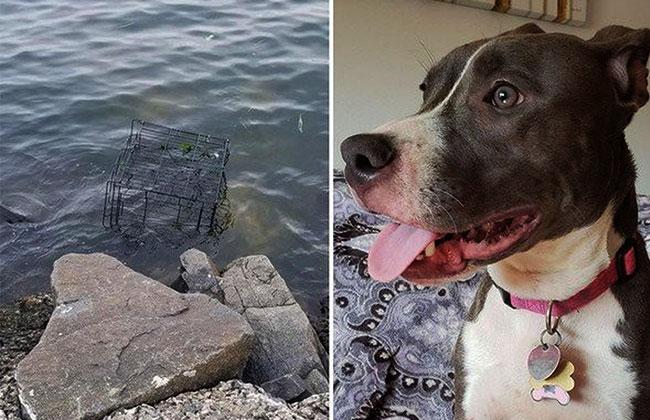 River-Hund