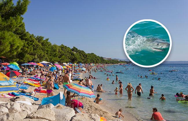 Hai Kroatien